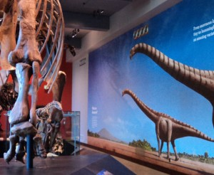graphics-museums-NaturalHistoryMuseumofLA-longnecks